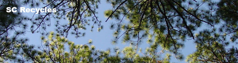 pine tree tops and sky